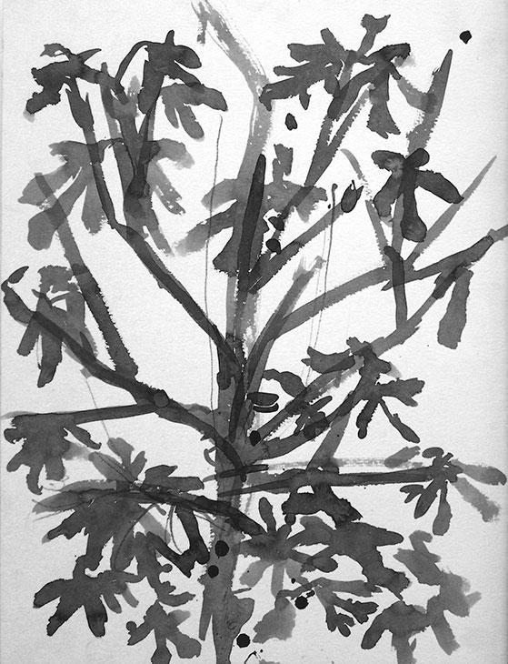 Drevo fige, 2000
