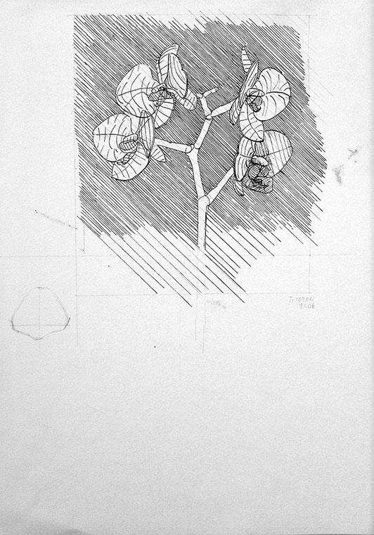 Cvetovi 1, 2006