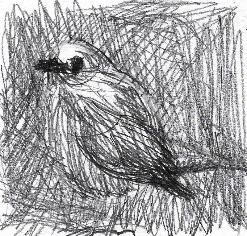 Ptica, junij 2020