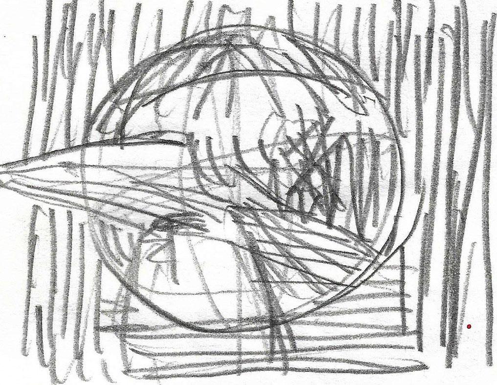 Glava ptice, avgust 2020