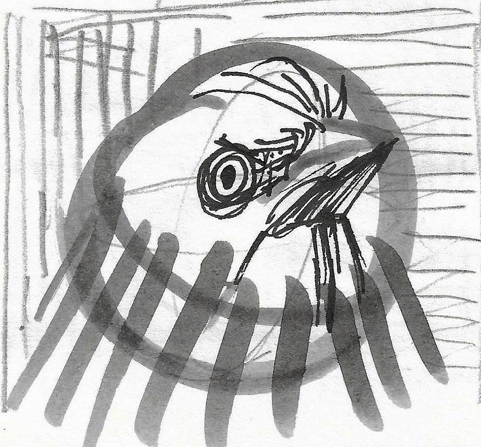 Ptica pevka, avgust 2020